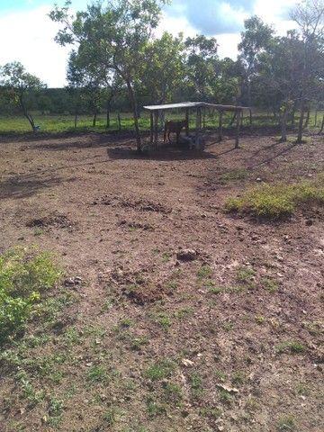 Vendo uma linda fazenda no município de conceição do Tocantins 15 milhões   - Foto 8