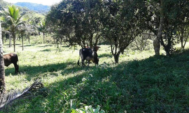 Vendo fazenda com 32 alqueres - Foto 11