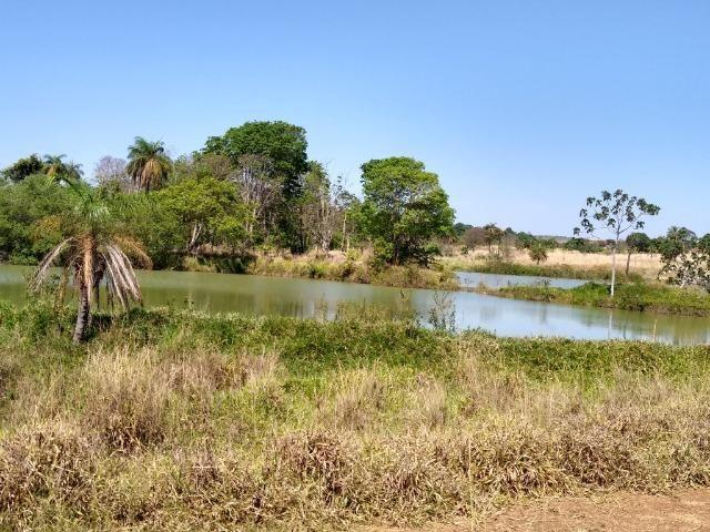 Fazenda localizada no Bezerra - Formosa/GO - Foto 8