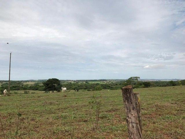 Fazenda Brazabrantes 12 alq. Planos ! - Foto 12