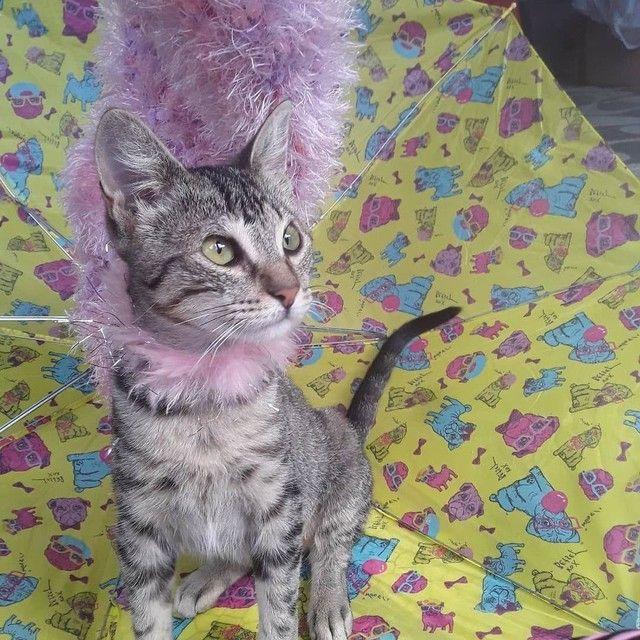 Doação linda gatinha tigradinha castradinha 5 meses  - Foto 4