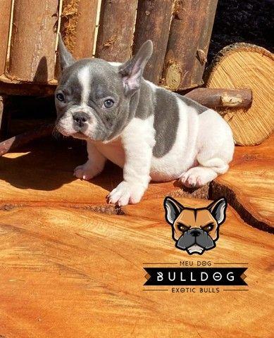 Bulldog frances - Foto 5