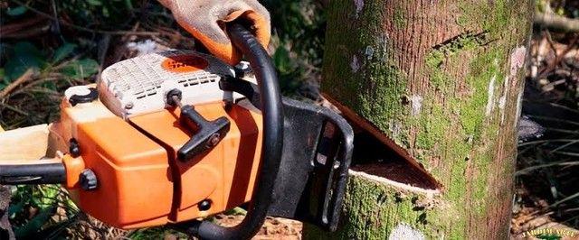 Corte de árvore galhos  - Foto 3