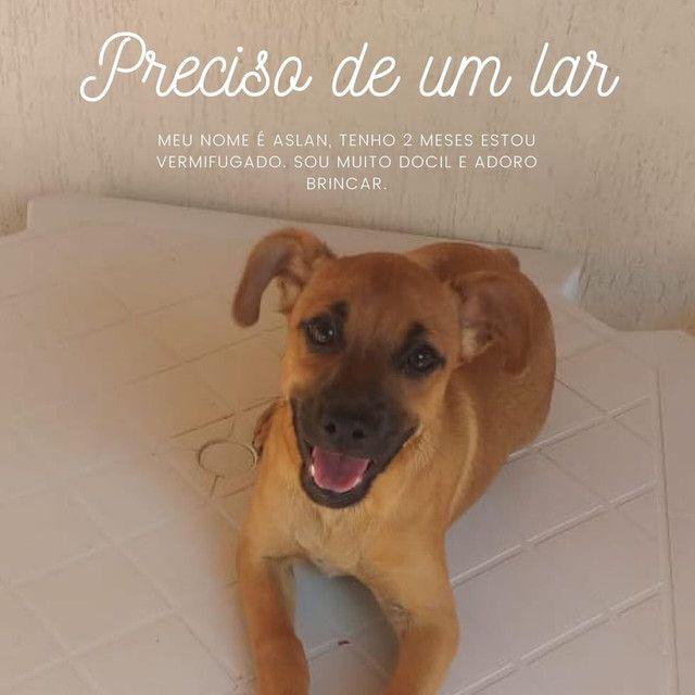 Doação de cachorro Macho