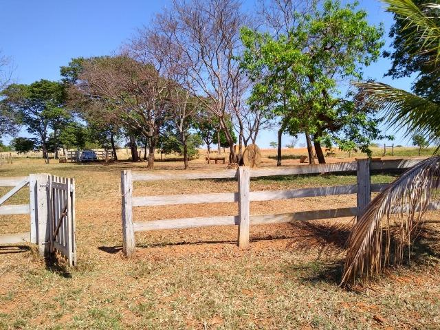 Fazenda localizada no Bezerra - Formosa/GO - Foto 5