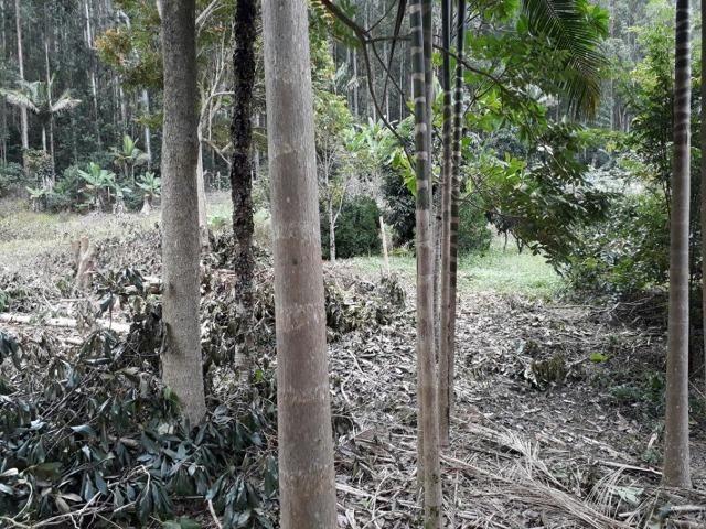 Linda chácara 3.000² a 7 km do trevo de Fazenda do Estado e 15km de Pedra Azul D.M.!! - Foto 8