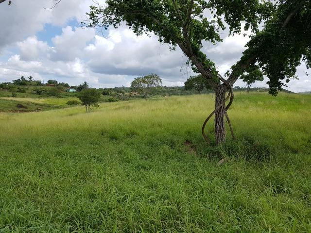 João Alfredo = Vend. 350 - Sítio com 17 Hect. Pronto pra Plantar e Criar - Foto 2