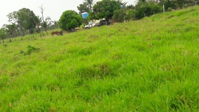 Fazenda no Pará - Foto 6