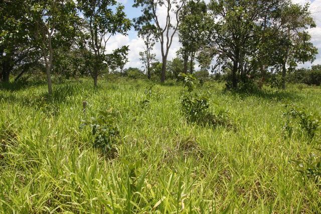 Sítio de 3 hectares 30.000m² por 100.000,00 - Foto 15