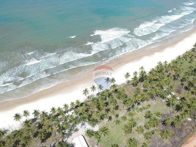 Terreno à venda, 117242 m² por r$ 3.100.000 - aritaguá - itacaré/ba - Foto 6