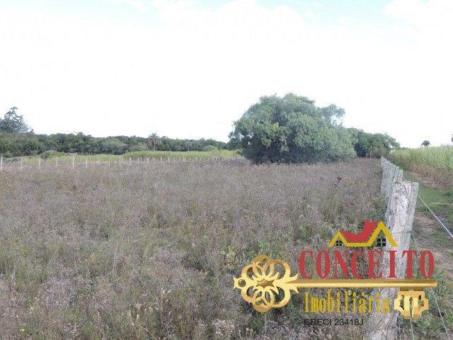 T.O.R.R.O 3,5 hectares no centro de Águas Claras por apenas R$ 300 mil - confira - Foto 8