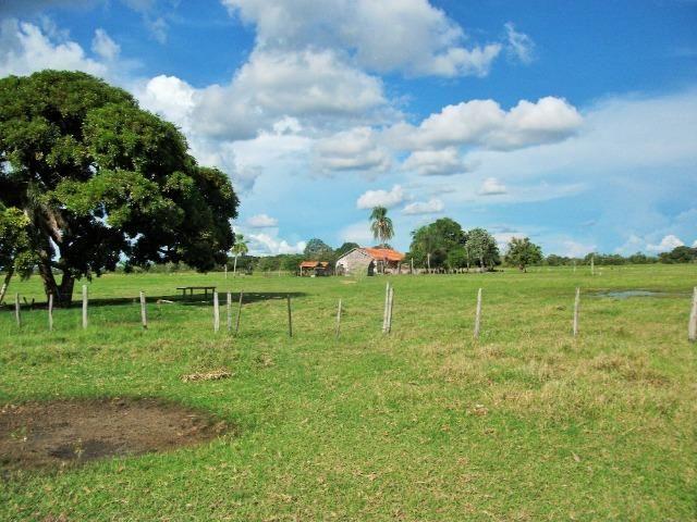 Excelente Fazenda no Pantanal do Mato Grosso do Sul - Foto 5