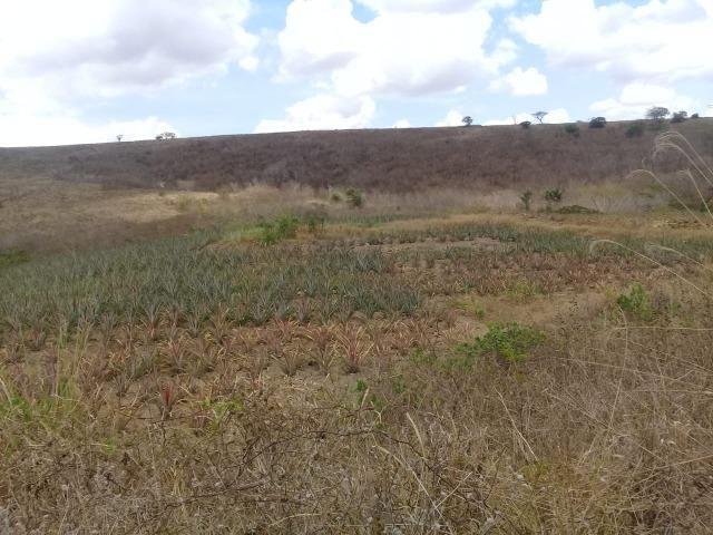 Pombos-Vend. 480 mil reais-Tem 120 Hect. Fazenda Completa,Água,Pastos, e mais - Foto 2