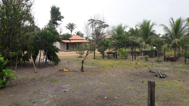 Fazenda no Pará - Foto 5
