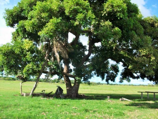 Excelente Fazenda no Pantanal do Mato Grosso do Sul - Foto 6