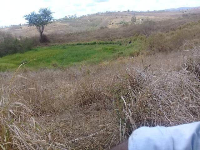 Pombos-Vend. 480 mil reais-Tem 120 Hect. Fazenda Completa,Água,Pastos, e mais - Foto 17
