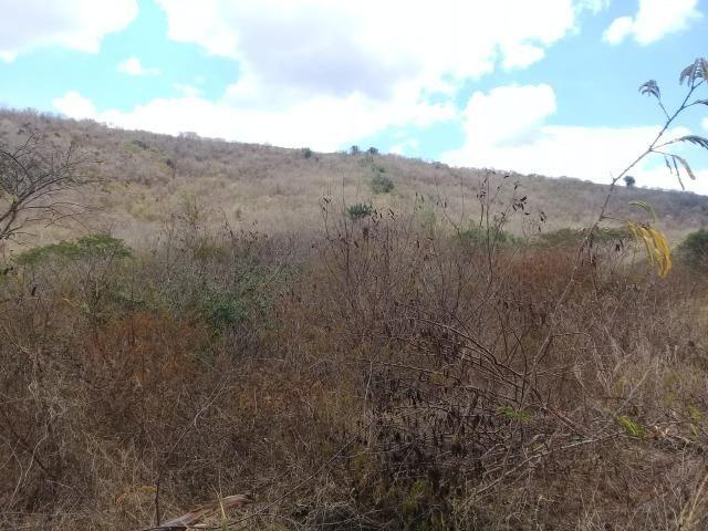 Pombos-Vend. 480 mil reais-Tem 120 Hect. Fazenda Completa,Água,Pastos, e mais - Foto 15