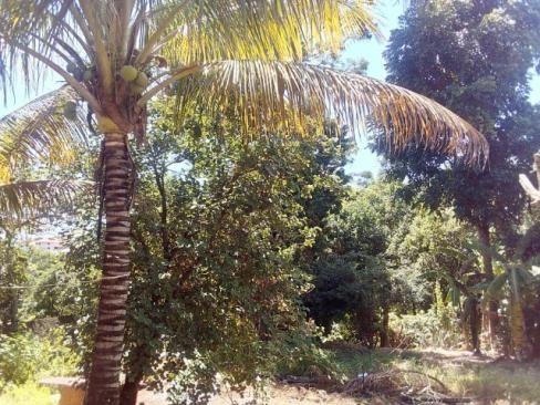 Colonia agricola samambaia chacara 139 Sobrado ,( vicente pires) - Foto 5