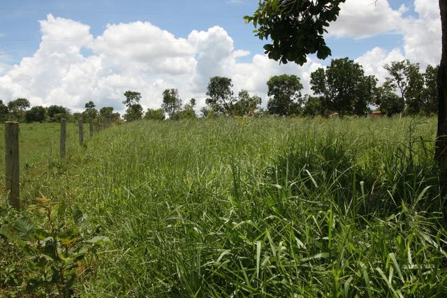 Sítio de 3 hectares 30.000m² por 100.000,00 - Foto 12