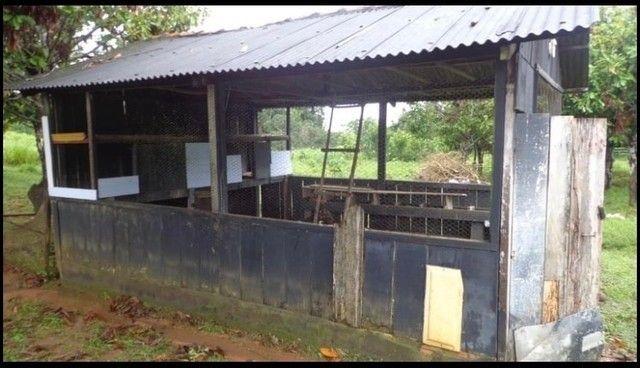 Vendo Excelente fazenda 95 hectares 36 Km de Porto Velho - Foto 10
