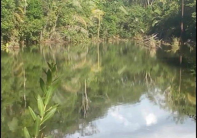 Vendo Excelente fazenda 95 hectares 36 Km de Porto Velho - Foto 14