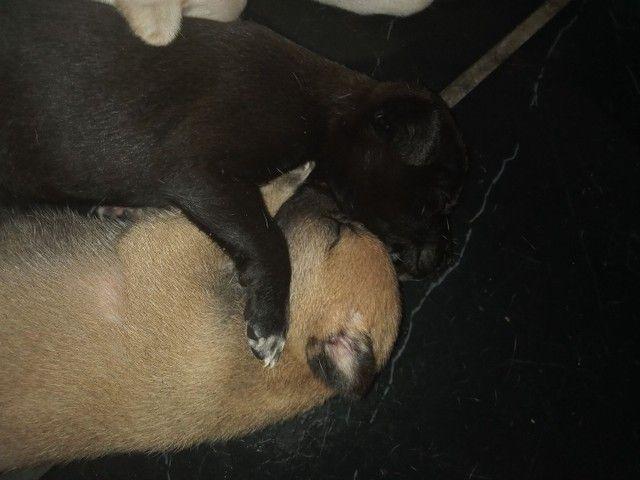 Cachorros para doar - Foto 3