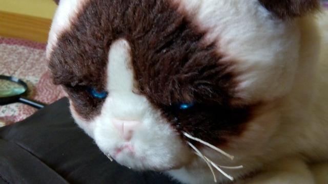 GRUMPY CAT - pelúcia do personagem somente OLX e RJ