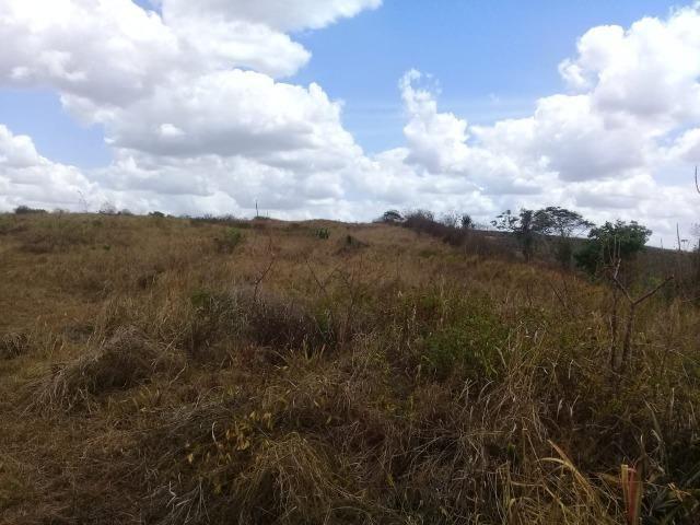 Pombos-Vend. 480 mil reais-Tem 120 Hect. Fazenda Completa,Água,Pastos, e mais - Foto 14