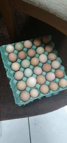Vendo ovos caipira orgânico, - Foto 4