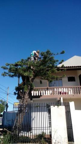 Jardinagem tomasi - Foto 4
