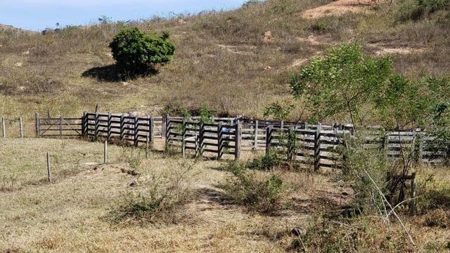 Fazenda 42 Alqueires em Campanário/MG, região de Governador Valadares/MG - Foto 14