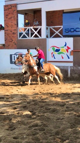 Cavalo vaquejada