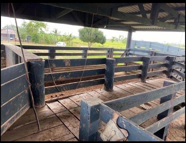 Vendo Excelente fazenda 95 hectares 36 Km de Porto Velho - Foto 8