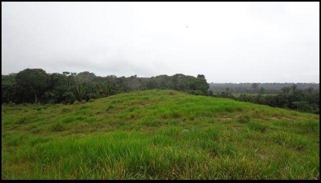 Vendo Excelente fazenda 95 hectares 36 Km de Porto Velho - Foto 17