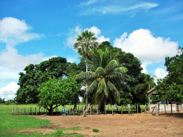 Excelente Fazenda no Pantanal do Mato Grosso do Sul - Foto 9