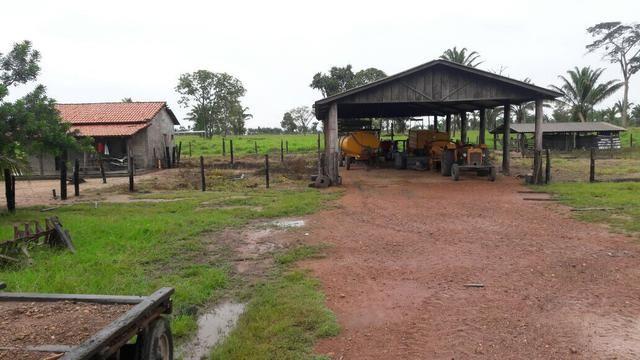 Fazenda no Pará - Foto 7
