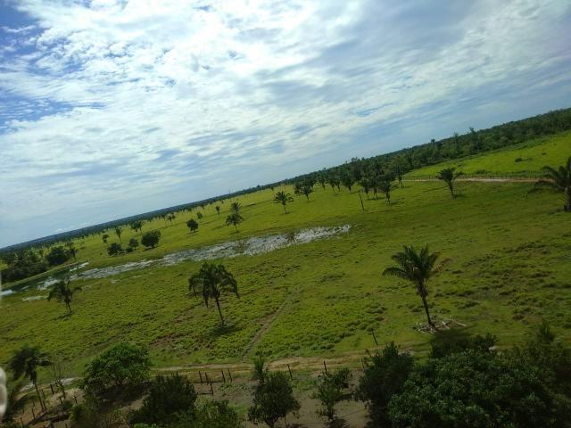 Fazenda no Pará - Foto 19