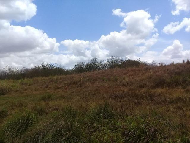 Pombos-Vend. 480 mil reais-Tem 120 Hect. Fazenda Completa,Água,Pastos, e mais - Foto 18