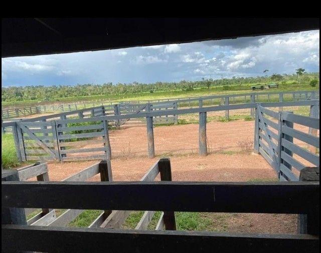 Vendo Excelente fazenda 95 hectares 36 Km de Porto Velho - Foto 9
