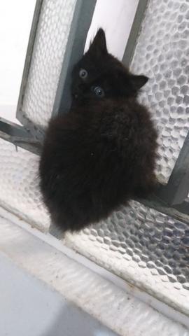 Gatinhos para adoção responsável e amorosa urgente! - Foto 2