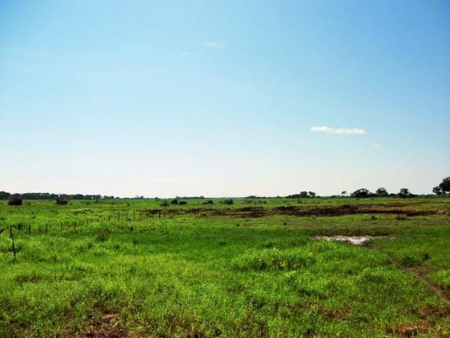 Excelente Fazenda no Pantanal do Mato Grosso do Sul - Foto 2