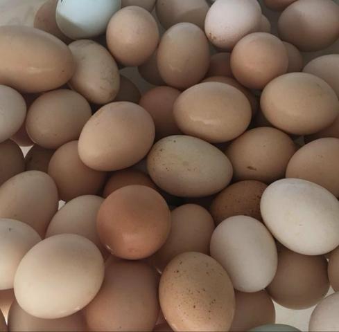 Vendo ovos caipira orgânico, - Foto 5