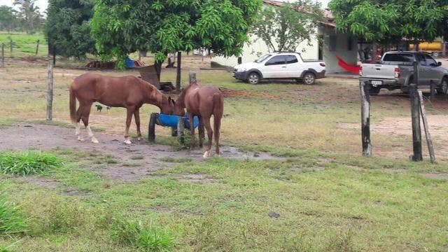 Fazenda no Pará - Foto 4