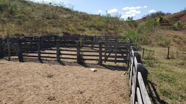 Fazenda 42 Alqueires em Campanário/MG, região de Governador Valadares/MG - Foto 17