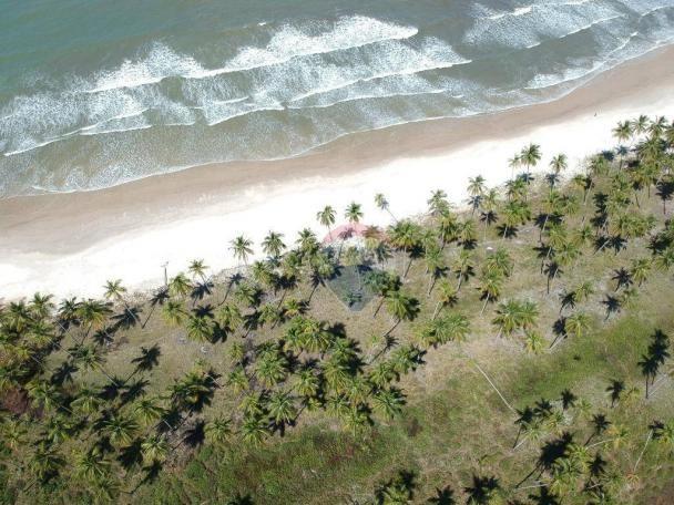 Terreno à venda, 117242 m² por r$ 3.100.000 - aritaguá - itacaré/ba - Foto 7