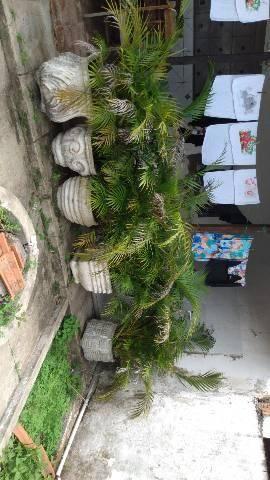 Vendo 12 jarros com palmeirinha R$50 cada um  - Foto 2