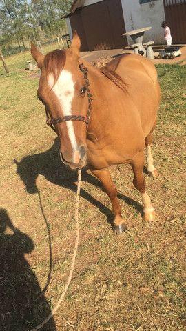 Cavalo Pitiço - Foto 3