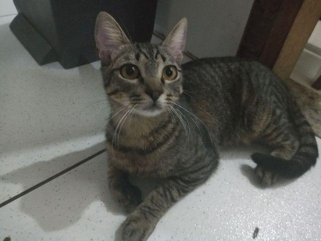 adoção de gatos  - Foto 2