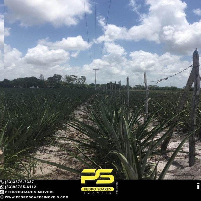 Terreno com plantação à venda, 200000 m² por R$ 1.000.000 - Santa Rita/PB - Foto 3