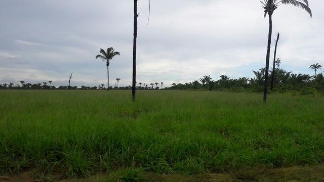 Fazenda no Pará - Foto 8